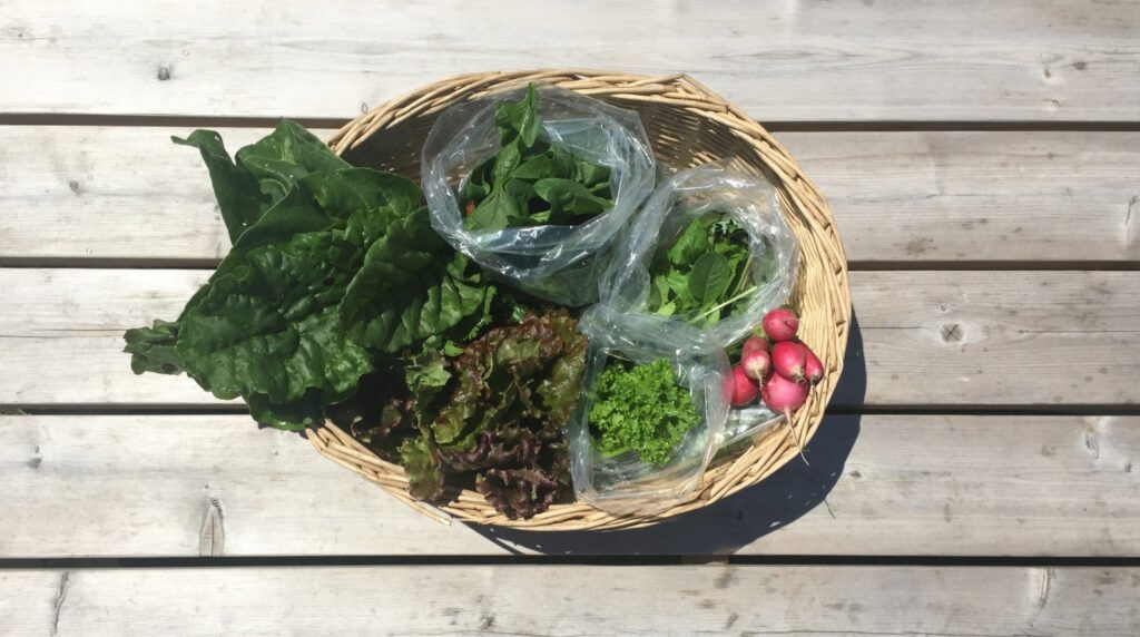 Last Week's Farm Share