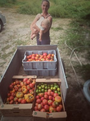 Cart-load o' tomatoes