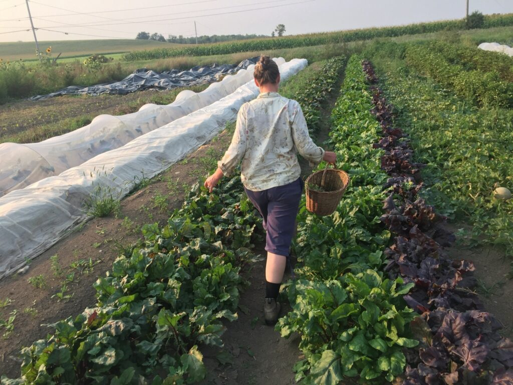 Skipping down the vegetable row