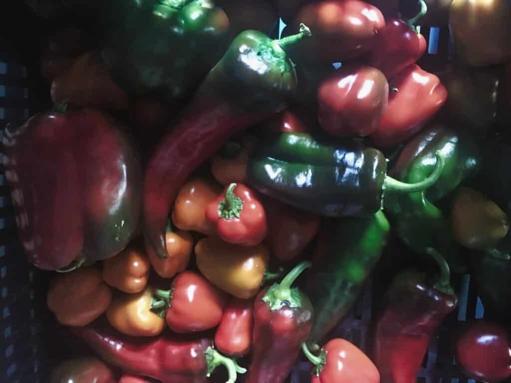 Organic Heirloom Peppers